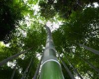 竹森林在夏天 免版税图库摄影