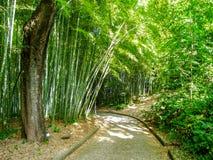 竹森林在植物园里在罗马 免版税库存图片