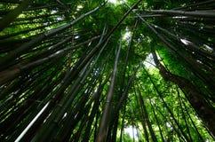 竹森林在毛伊,夏威夷 免版税库存图片