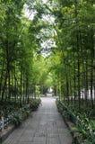竹森林在现代城市 免版税库存图片