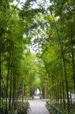 竹森林在现代城市 免版税库存照片