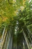 竹森林在秋天期间的Arashiyama京都 免版税库存照片