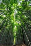 竹森林在阳光背景的Arashiyama 库存图片