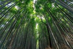 竹森林在阳光背景的Arashiyama 免版税库存照片
