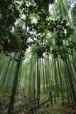 竹森林在Arashiyama,日本 免版税图库摄影