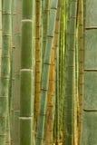竹森林在Arashiyama 库存照片