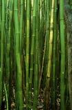 竹森林夏威夷 免版税图库摄影