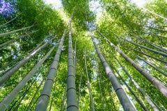 竹森林树丛 库存照片