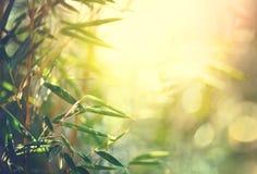 竹森林生长竹子 库存照片