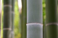 竹森林自然本底 免版税库存照片