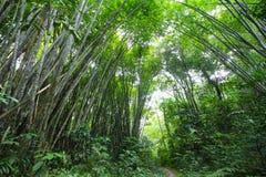 竹森林足迹-系列2 库存图片