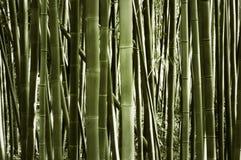 竹森林风景  免版税库存照片