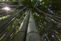 竹森林 免版税图库摄影