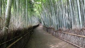 竹森林Arashiyama背景 股票视频