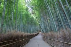 竹森林Arashiyama道路  免版税图库摄影