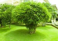 竹植物和绿草庭院 免版税库存图片