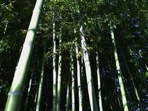 竹植物从下面 免版税库存照片