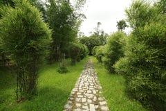 竹植物 库存图片