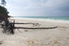 竹海岛海滩 库存图片