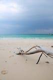 竹海岛漂流木头泰国 免版税库存照片