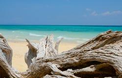 竹海岛,泰国的木龙 免版税图库摄影