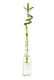 竹玻璃瓶绿色 图库摄影