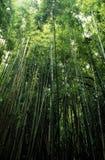 竹结构树 免版税库存图片