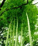 竹结构树 图库摄影