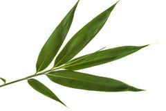 竹绿色叶子 库存图片