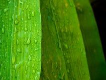 竹绿色叶子 免版税库存照片
