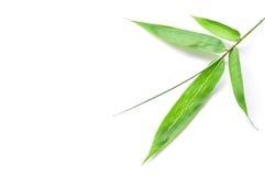 竹绿色查出的叶子 免版税库存图片
