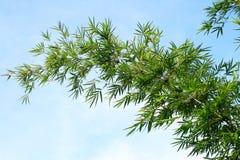 竹绿色结构树 免版税库存图片