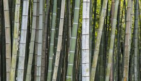 竹背景墙纸 图库摄影