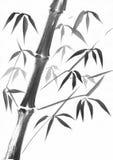 竹茎水彩研究 库存照片