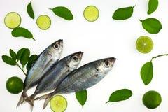 竹荚鱼类crumenophthalmus、大眼鲷大量、鱼用柠檬和叶子是 免版税库存图片