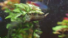 竹虾 影视素材