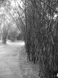 竹足迹 库存图片
