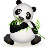竹逗人喜爱的吃熊猫 免版税图库摄影