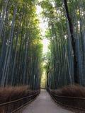 竹道路Arashiyama 图库摄影