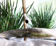 竹面盆Tsukubai在日本庭院里 免版税库存照片