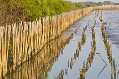 竹水墙壁 免版税库存图片