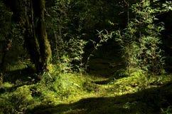竹阴影原始森林, jiuzhai谷 图库摄影
