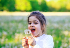 笑与在晴朗的蒲公英花的美丽的小女孩 免版税库存图片