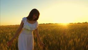 笑的女孩走领域用在金黄太阳的强光的麦子 慢的行动 股票视频