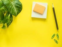 笔记的笔记薄,绿色植物在黄色桌面,平的位置,拷贝空间离开 免版税图库摄影