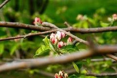 符号新鲜的春天开花 免版税库存图片