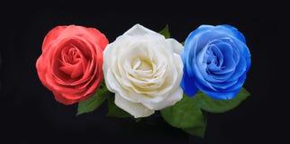 符号红色白色和蓝色全国颜色玫瑰 免版税库存照片