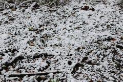 第一个冬天雪分支 免版税库存照片