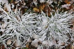 第一个冬天雪分支 免版税库存图片