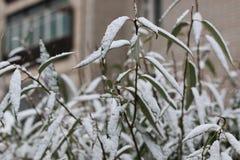 第一个冬天雪分支 库存图片